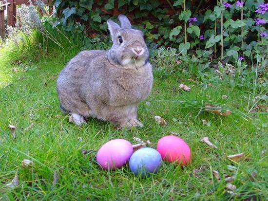Hoppy Easter, everyone! - WIKIMEDIA COMMONS