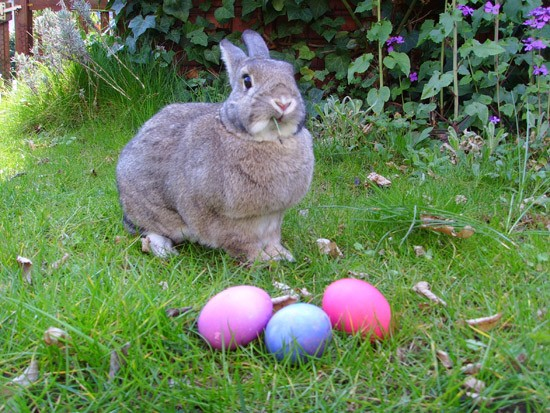 Hoppy Easter, everyone! - WIKIMEDIA COMMONS