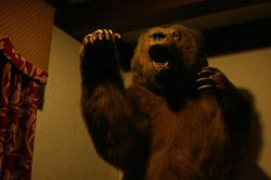 The bear inside the Fox and Hounds is thrilled with the news about the Cheshire.