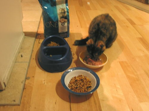 L-R: Purina, Cat Munchies, Evanger's Beef Tips in Gravy. This picture encapsulates the entire Cooking For Your Cat experience.