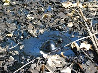 Tar pit or office coffee? - DANIEL SCHWEN, WIKIMEDIA COMMONS