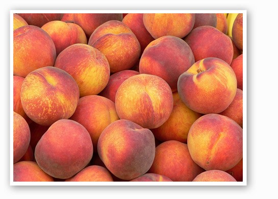 Pick-your-own peaches for 99 cents a pound. | Eckert's
