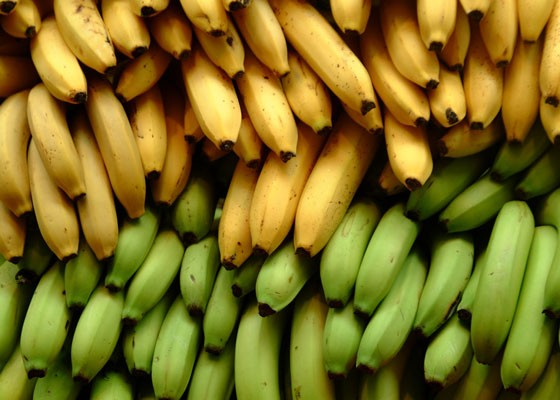 Bananas in Pajamas Cabanas.   Ian Ramsey