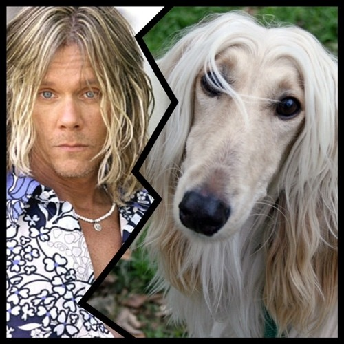 Kevin Bacon is clearly an Afghan Hound