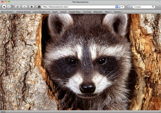 THE RACCOONISTS TUMBLR PAGE