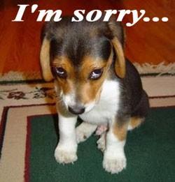 sorry_puppy.jpg