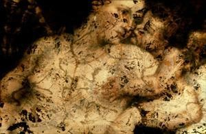 Andrea Fraser (American, b. 1965). Untitled (Pollock/Titian) #4. - MILDRED LANE KEMPER ART MUSEUM, WASHINGTON UNIVERSITY IN ST. LOUIS. UNIVERSITY PURCHASE, PARSONS FUND, 2006.