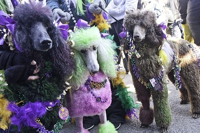The dogs go marching in Soulard on Sunday. - CRYSTAL ROLFE