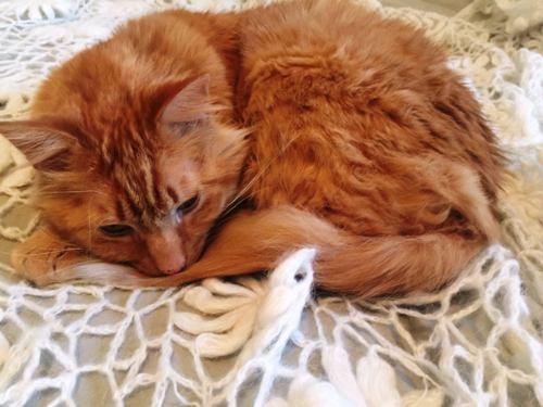 MATT THE CAT, HOME | MAIRE MURPHY
