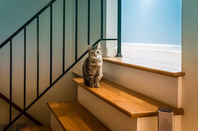 Cats are coming! - IMAGE VIA FLICKR/BRADLEY HUCHTEMAN