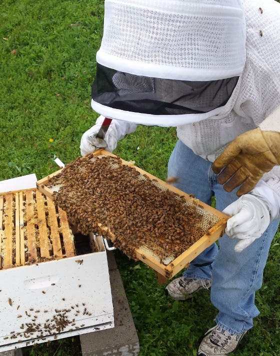 ONE OF THREE BEE HIVES AT THE GARDENS OF VIN DE SET | PHOTO COURTESY OF VIN DE SET