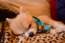 Huffines' dog also has cancer. - KATELYN MAE PETRIN