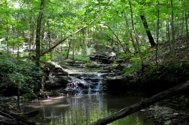 Olin Nature Preserve, Beaver Falls Creek. - PHOTO COURTESY OF THE NATURE INSTITUTE.