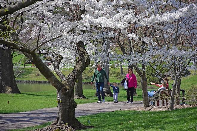 MoBOT is gorgeous in cherry blossom season. - SUNDOS SCHNEIDER