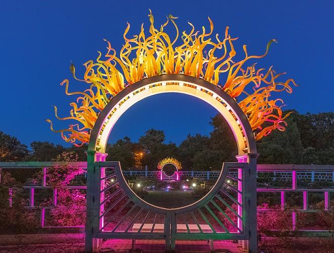 Garden Party Lights has it going on. - ROBERT SCHMIDT/MISSOURI BOTANICAL GARDEN