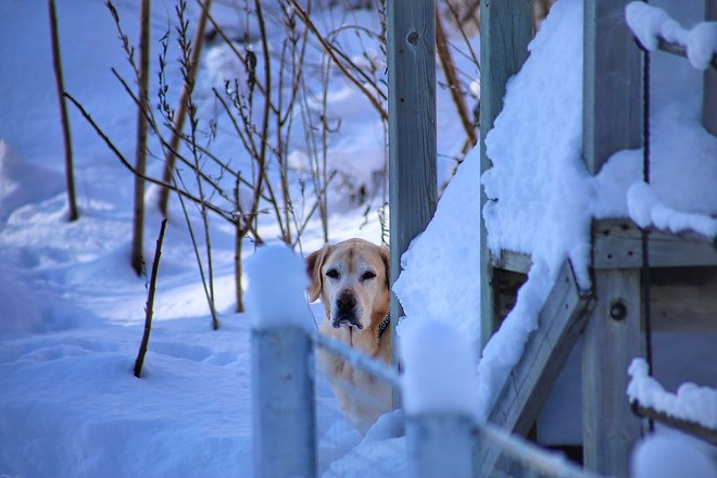 Doggie, it's cold outside. - JAY / FLICKR