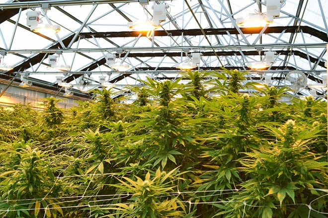 As of January 1, weed is now legal in Illinois. - FLICKR/ OREGON DEPARTMENT OF AGRICULTURE