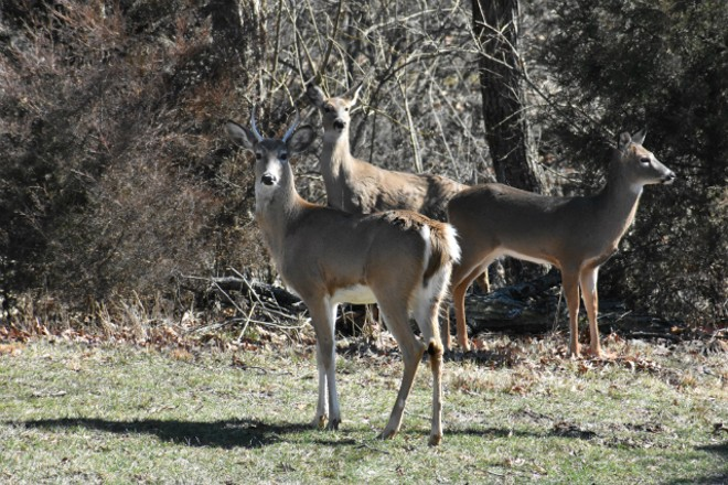 Looks like the deer will have Jefferson Barracks to themselves for a while. - DOYLE MURPHY