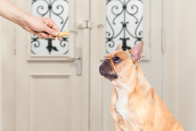 featured_image_-_best_cbd_treats_for_dogs.png