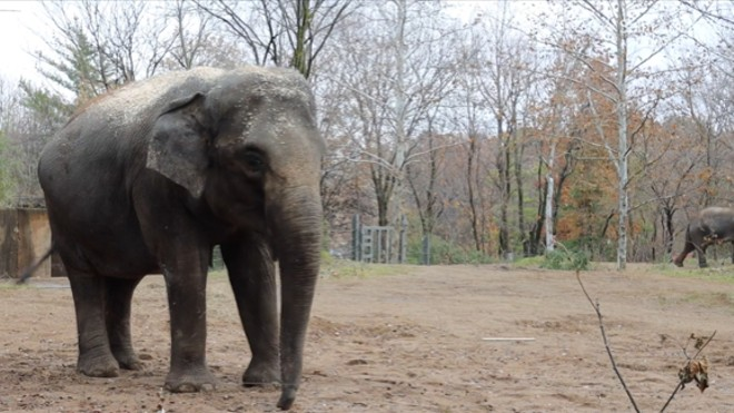Lookin' good, Rani. - SCREENGRAB FROM THIS SAINT LOUIS ZOO VIDEO / YOUTUBE