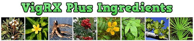 vigrx-plus-ingredients-list.png