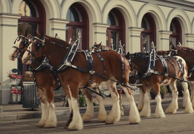 """No, these aren't Budweiser Clydesdales. They're just """"horses."""" - SCREENSHOT VIA YOUTUBE"""