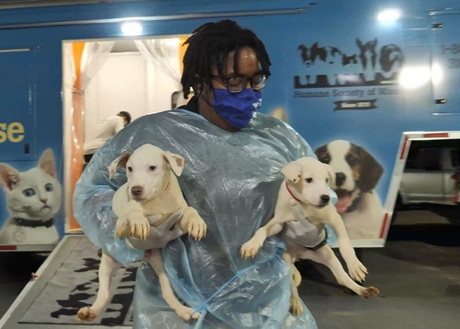 Two pups rescued in Louisiana by the Missouri Humane Society. - COURTESY OF HUMANE SOCIETY OF MISSOURI