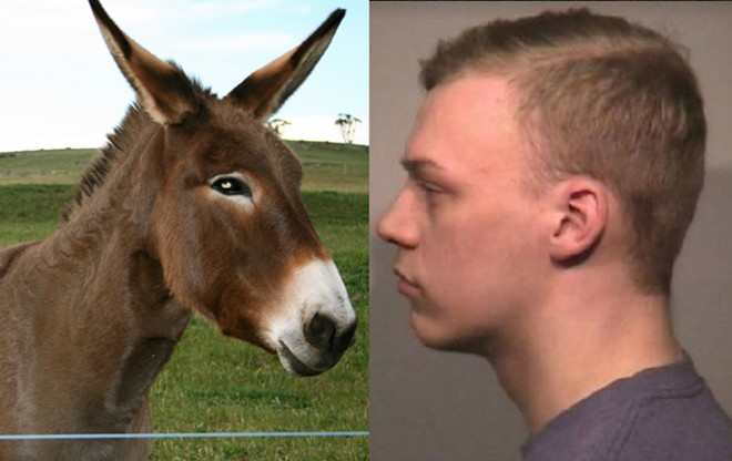 DONKEY PHOTO VIA ANNIE KAVANAGH / FLICKR, MUGSHOT VIA COLLINSVILLE POLICE