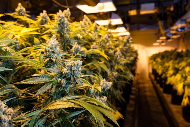 Marijuana is now big business in Colorado. Missouri? Not so. - SHUTTERSTOCK/ERIC LIMON