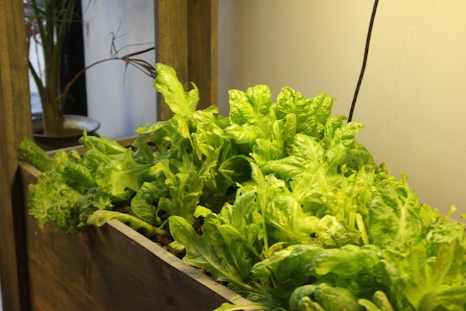 Beds of lettuce keep the restaurant in greens. - PHOTO BY SARAH FENSKE