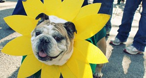 Dogs on Parade in Soulard