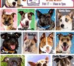 Needy Paws Rescue Big Dog Adoption Event