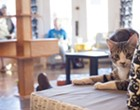 10 Times Mauhaus Cat Cafe Was the Cutest Thing on the Internet