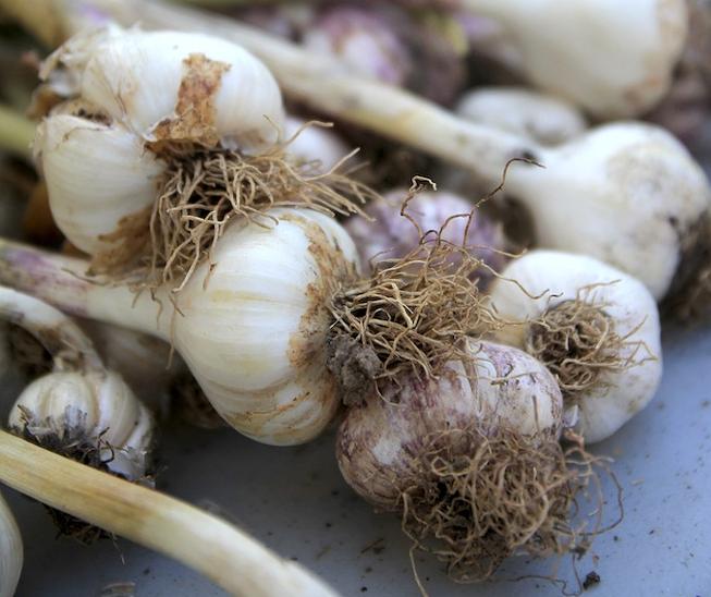 Scenes from Garlic Festival at Carondelet Park