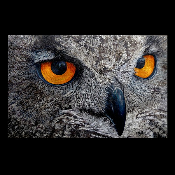 The Laumeier Art Fair includes work in all media, such as this excellent embroidery owl. - YANFANG INLOW