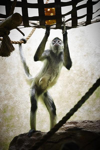 A very funky monkey. - STEVE TRUESDELL