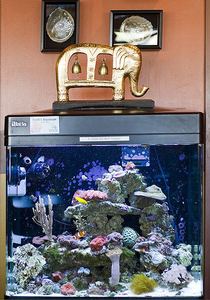 Tommy mentioned that the salt-water fish tank In the restaurant is something that they care for and maintain themselves. It has become quite a hobby for them. See a photo slideshow here. - PHOTO: JENNIFER SILVERBERG