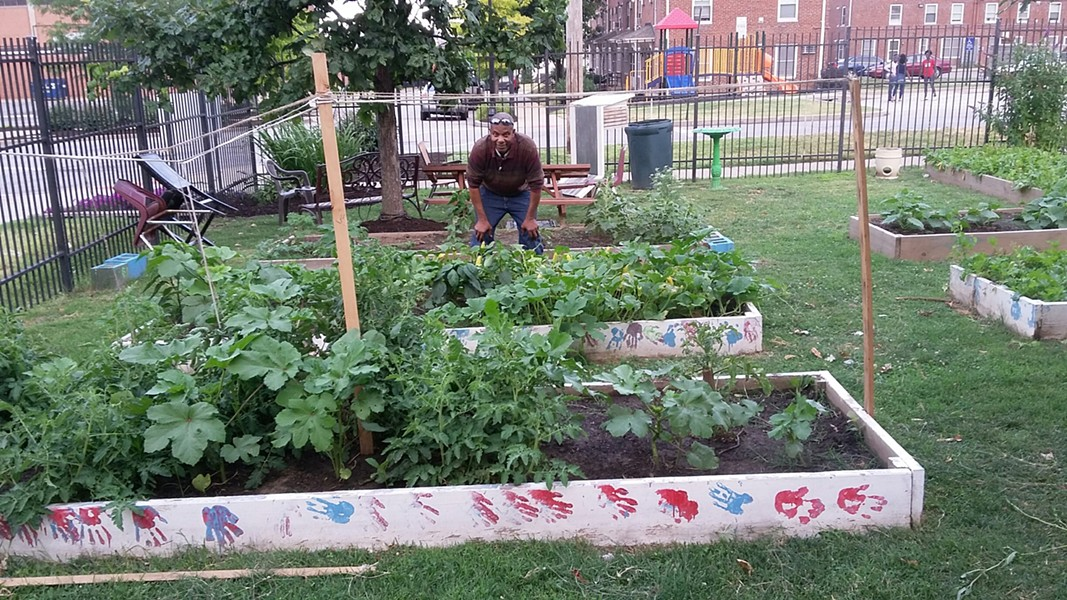 A downtown public housing complex's community garden has been vandalized repeatedly this year. Now, the community is trying to stop the vandals by building a larger fence to surround the garden. - PHOTO COURTESY OF SAM BLUE