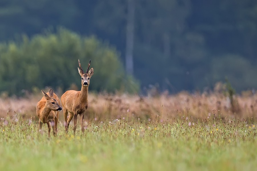 Hey deer. Yes, you. Drop that vacant expression and listen up. - SHUTTERSTOCK.COM/ JANUSZ PIENKOWSKI