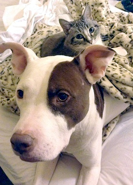 Florissant threatened to euthanize Mandi Kay Sullivan's dog Dexter. - COURTESY OF MANDI KAY SULLIVAN
