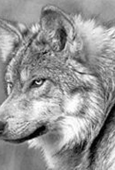 Kids, meet wolves; wolves, meet kids at Lone Elk Park Sunday, July 6.