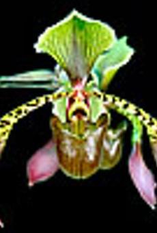 The Orchid Prescription