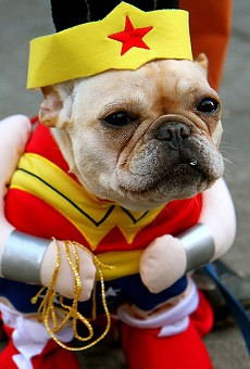 Let's face it: Man's best friend makes an adorable Wonder Woman.