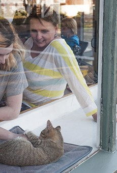 Mauhaus Cat Cafe Is Bringing Joy — and Cats — to Maplewood