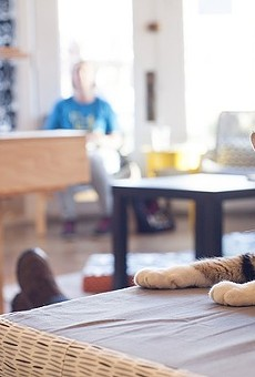 The cuteness at Mauhaus Cat Cafe is unreal.