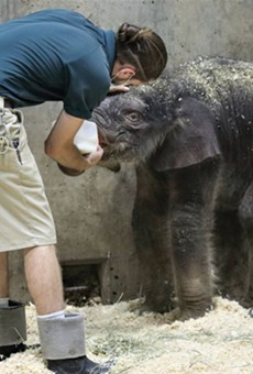 Avi the baby elephant arrived in the world to a zoo-full of love. But tragedy struck.