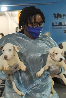 Two pups rescued in Louisiana by the Missouri Humane Society.