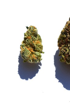Review: Tommy Chims Smokes Heya Wellness's Weed