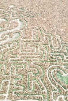 The twelve acre maze, while fun for the family, raised money for healthcare students.