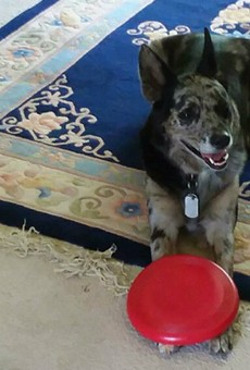 Dog Shot by Retired Police Officer Leads to Questions in Manchester